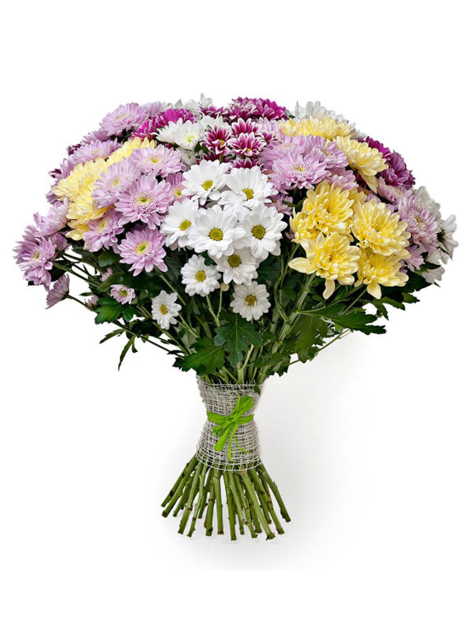 Картинки цветы хризантемы букеты